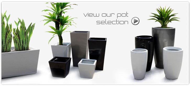 Arboreta Indoor Plants Pots